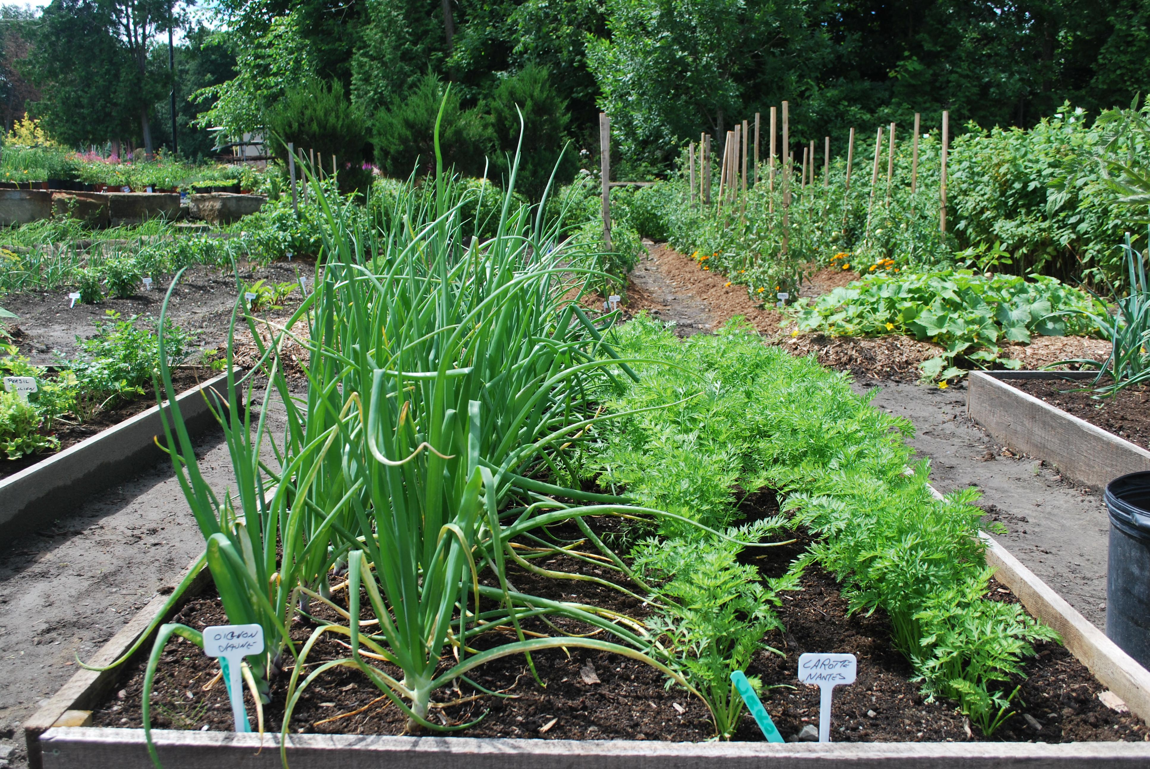 Que semer en juillet calendrier lunaire de juillet semis et plantation en juillet que semer - Que semer en octobre ...