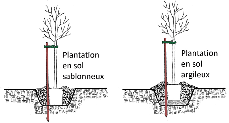 Technique de plantation