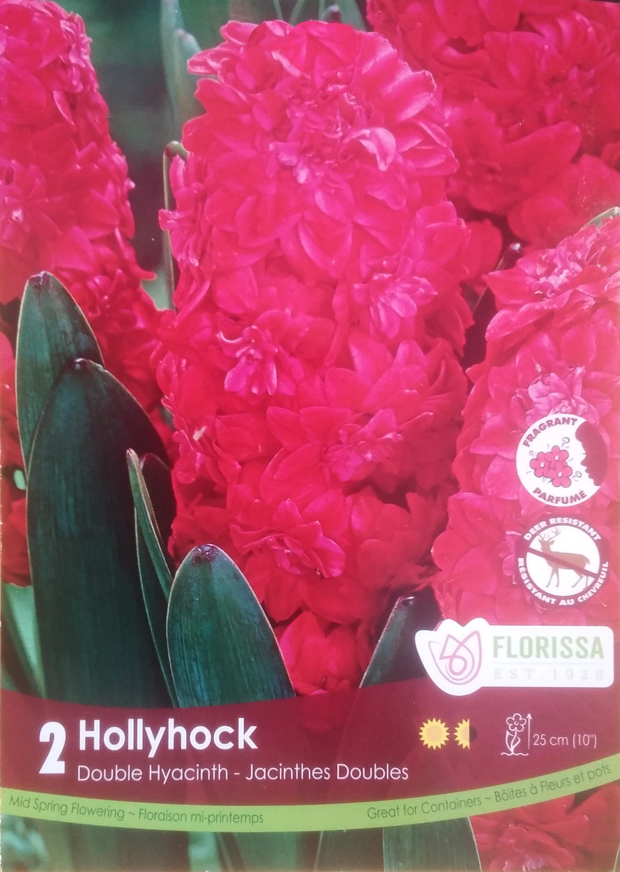 Jacinthe Hollyhock Bulbe Rouge Double Nos Produits Horticoles
