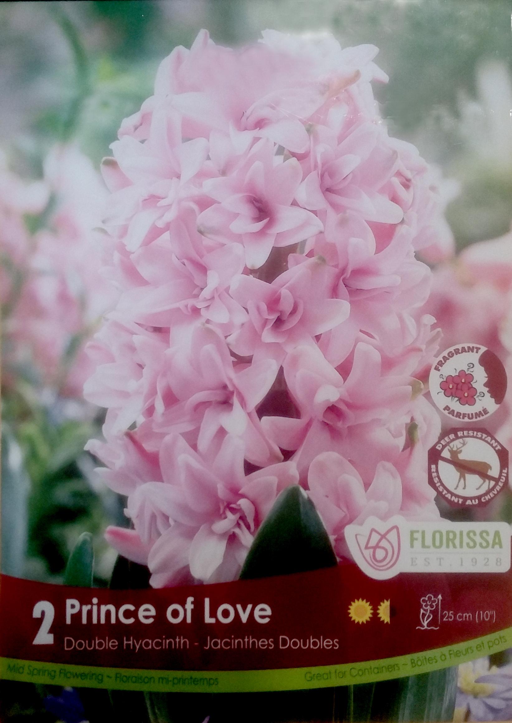 Jacinthe Prince Of Love Bulbe Rose Double Nos Produits