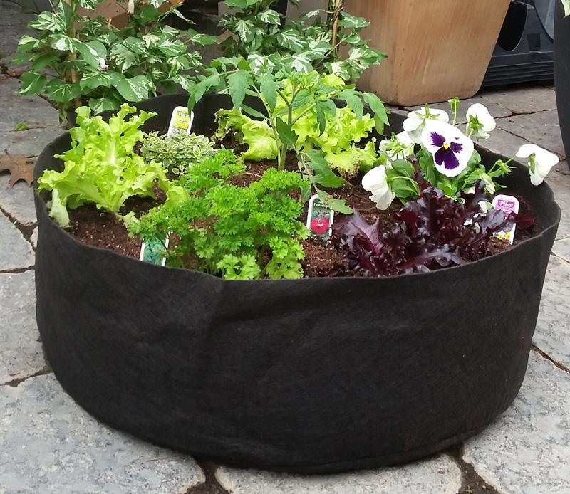 Smart Pot (jardin Instantane)