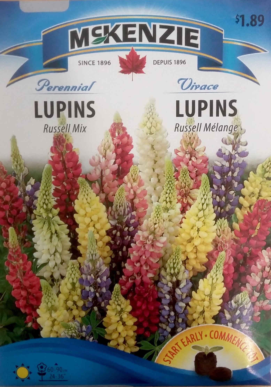 Lupin Russel Melange Semence Fleur Vivace Mckenzie Nos Produits