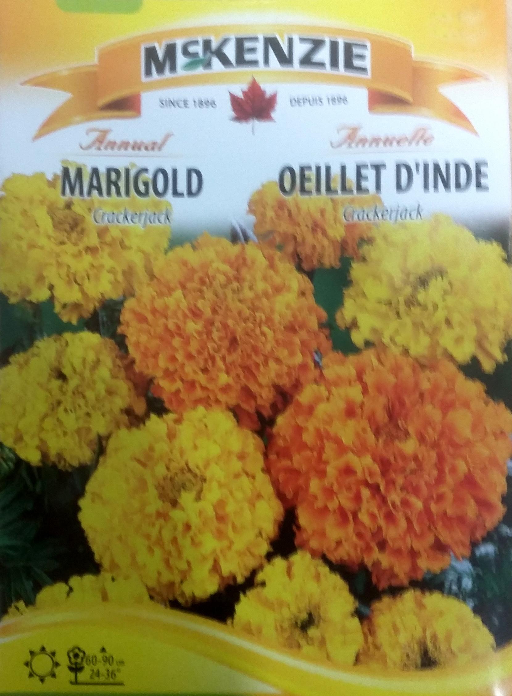 Oeillet d 39 inde crackerjack semence fleur ann mckenzie - Semer des oeillets d inde ...